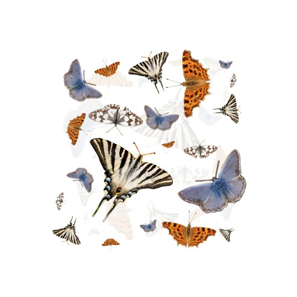 image for Colorful butterflies