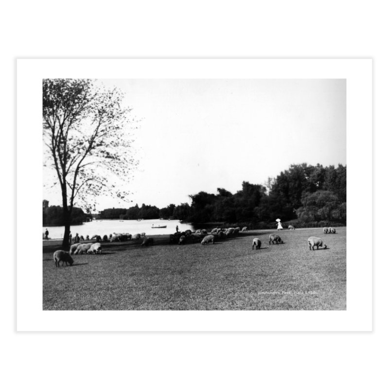 Vintage: Sheep in Washington Park 1906 Home Fine Art Print by chicago park district's Artist Shop
