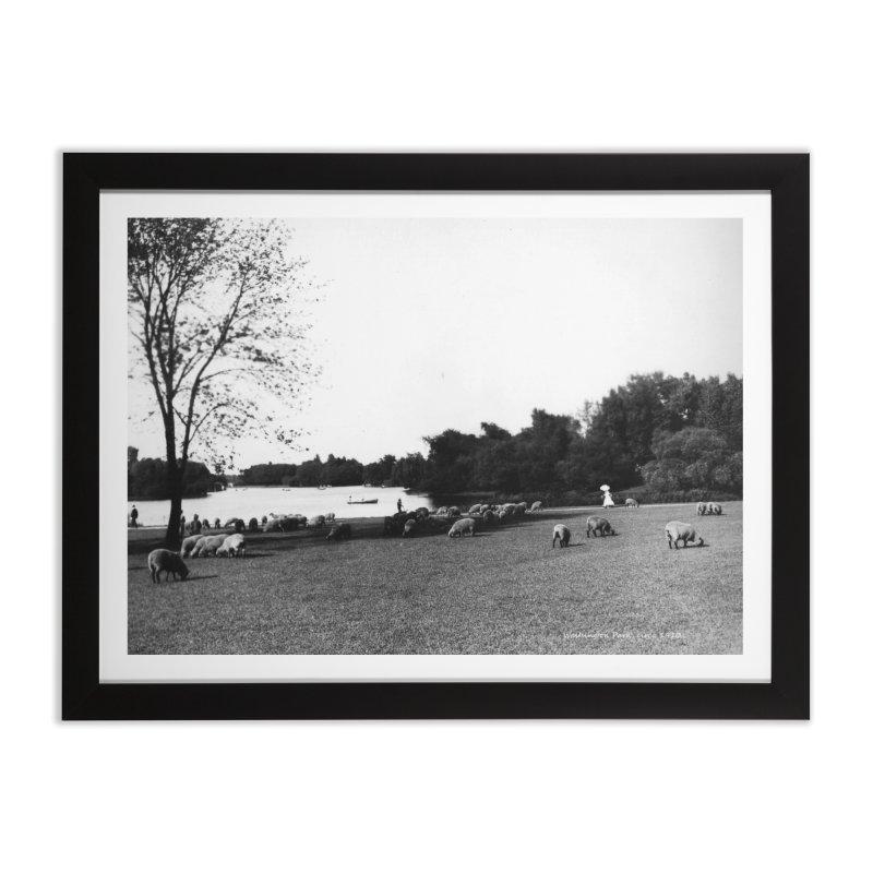 Vintage: Sheep in Washington Park 1906 Home Framed Fine Art Print by chicago park district's Artist Shop