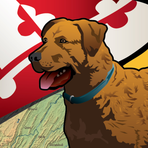American-And-Maryland-Labs