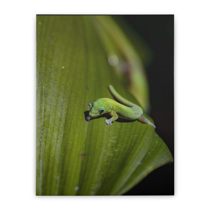 Gold Dust Day Gecko No. 1 Home Stretched Canvas by CLINTZERO ONLINE SHOP