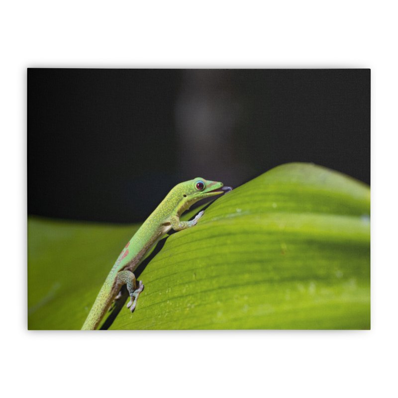 Gold Dust Day Gecko No. 2 Home Stretched Canvas by CLINTZERO ONLINE SHOP