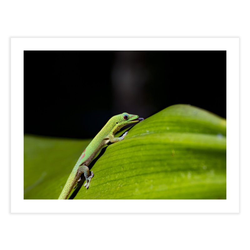 Gold Dust Day Gecko No. 2 Home Fine Art Print by CLINTZERO ONLINE SHOP