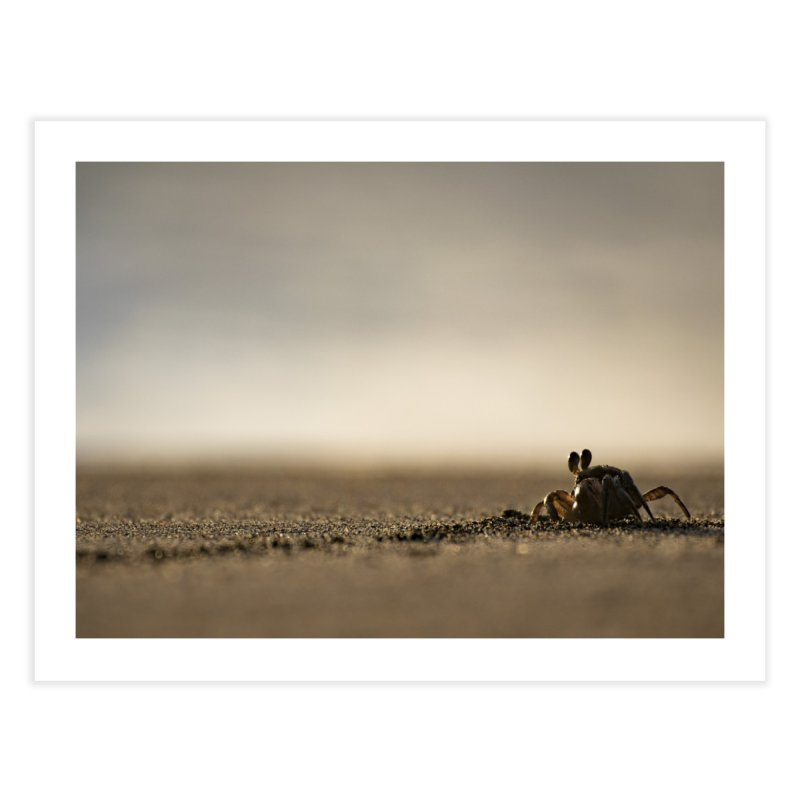 Pallid Ghost Crab Home Fine Art Print by CLINTZERO ONLINE SHOP