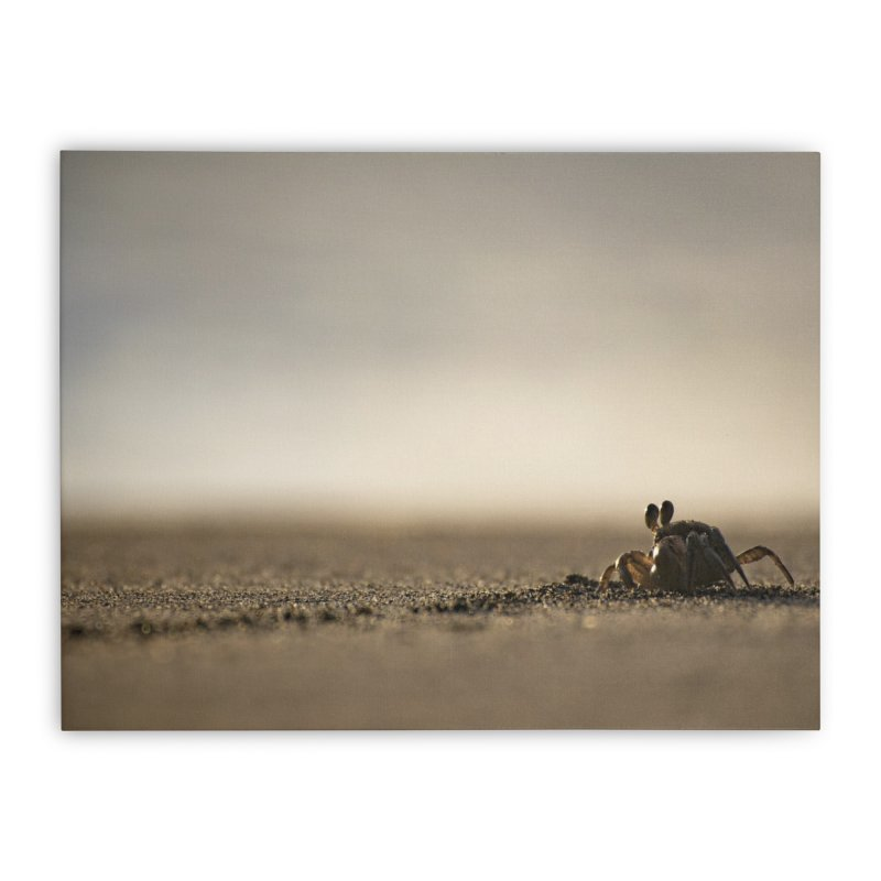 Pallid Ghost Crab Home Stretched Canvas by CLINTZERO ONLINE SHOP