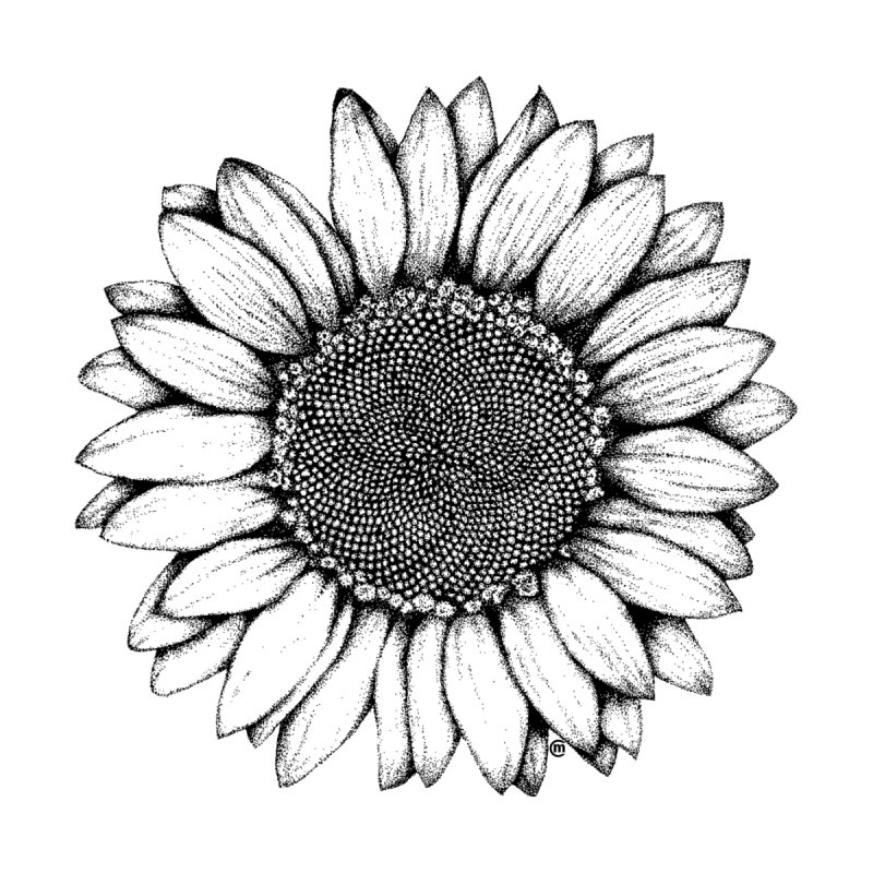 Sunflower   by cmatthesart's Artist Shop