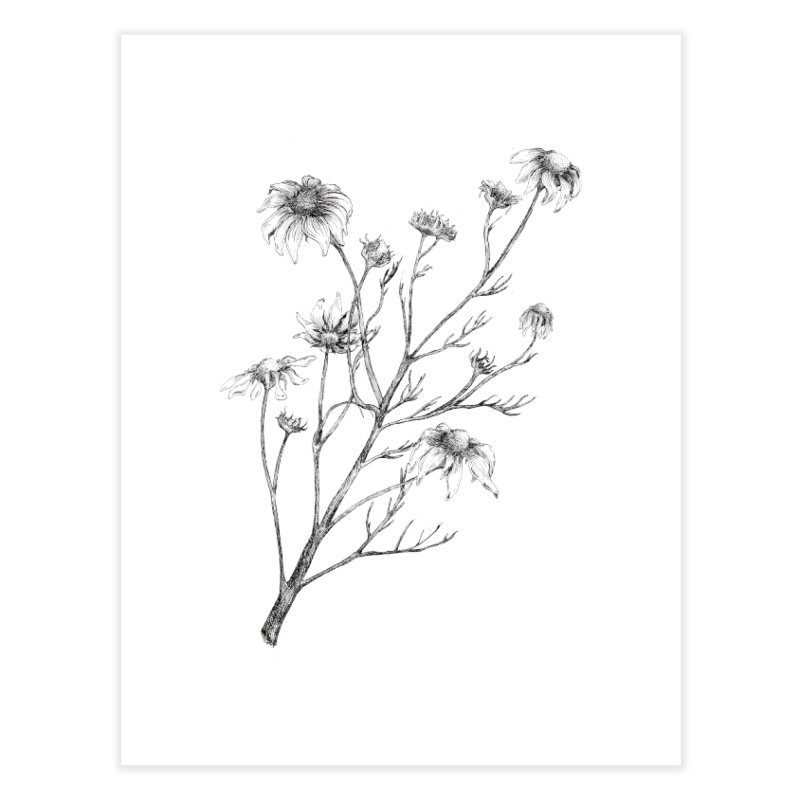 Wilted Chamomile Home Fine Art Print by compostpile's Artist Shop