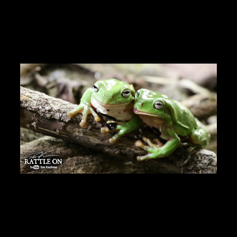 White's Tree Frogs by Dav Kaufman's Swag Shop!