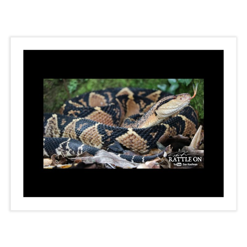 Bushmaster Home Fine Art Print by Dav Kaufman's Swag Shop!