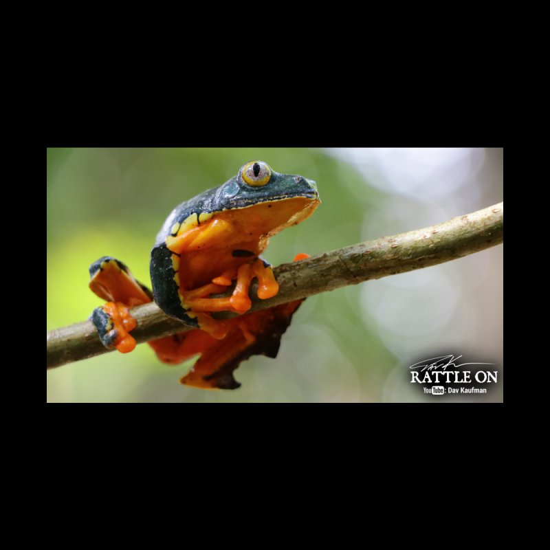 Amazon Leaf Frog Home Fine Art Print by Dav Kaufman's Swag Shop!