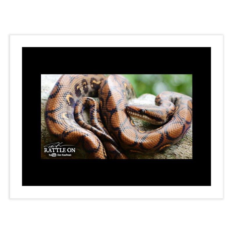 Peruvian Rainbow Boa Home Fine Art Print by Dav Kaufman's Swag Shop!
