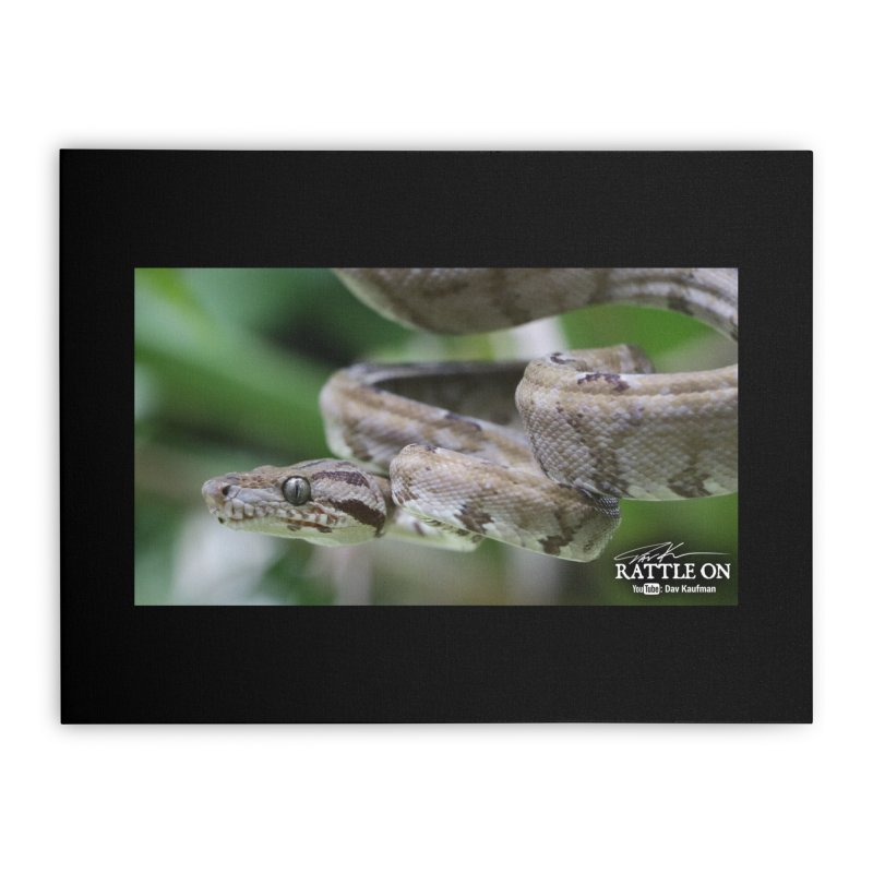 Amazon Tree Boa Home Stretched Canvas by Dav Kaufman's Swag Shop!