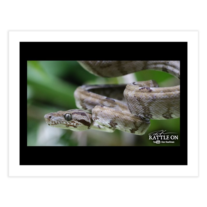 Amazon Tree Boa Home Fine Art Print by Dav Kaufman's Swag Shop!