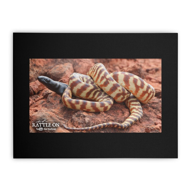 Black Headed Python Home Stretched Canvas by Dav Kaufman's Swag Shop!