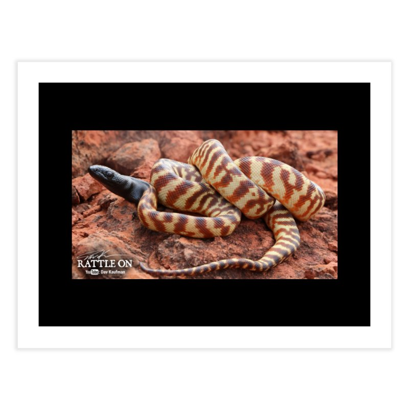 Black Headed Python Home Fine Art Print by Dav Kaufman's Swag Shop!