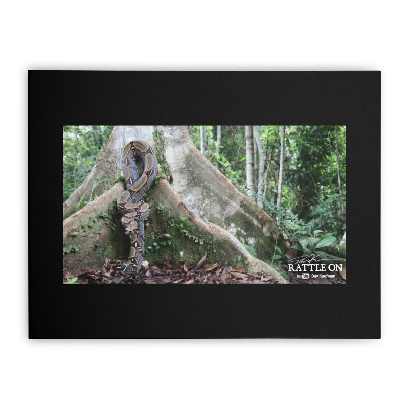 Peruvian Red-tailed Boa Home Stretched Canvas by Dav Kaufman's Swag Shop!