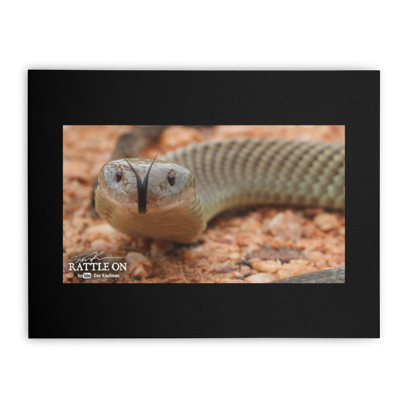Mulga (King Brown Snake) Home Stretched Canvas by Dav Kaufman's Swag Shop!