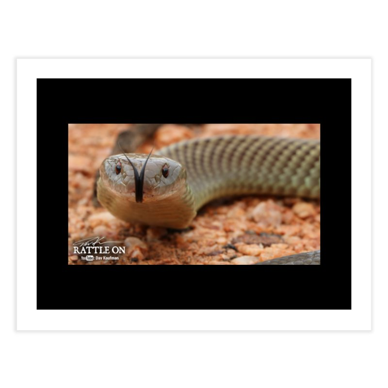 Mulga (King Brown Snake) Home Fine Art Print by Dav Kaufman's Swag Shop!
