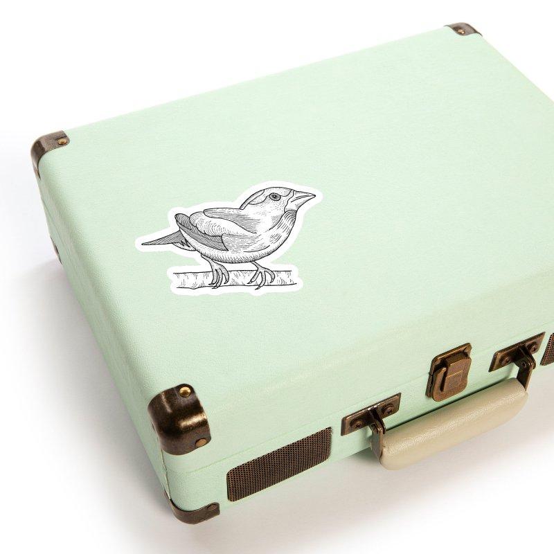 Evening Grosbeak Accessories Sticker by Dennis Good