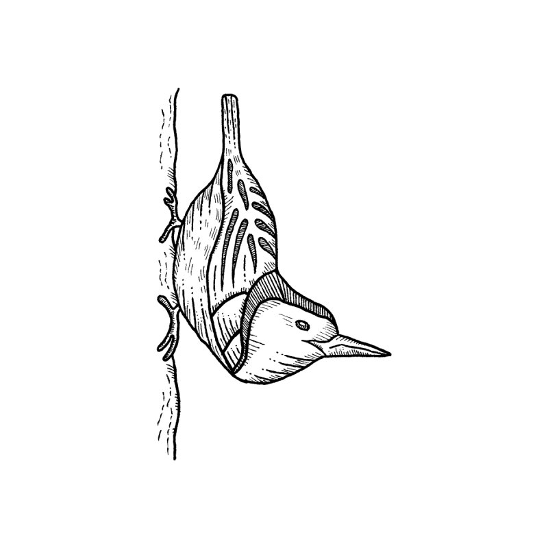 White-breasted nuthatch Accessories Sticker by Dennis Good