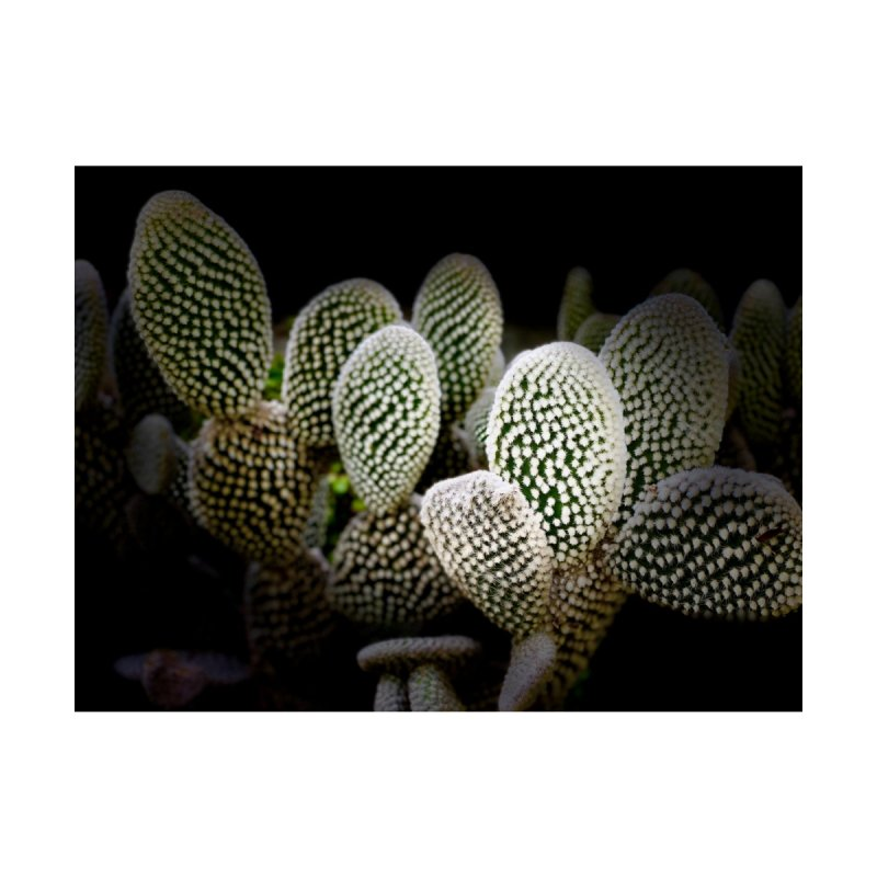 Cacti @ Night Accessories Phone Case by Disposable Bits's Shop