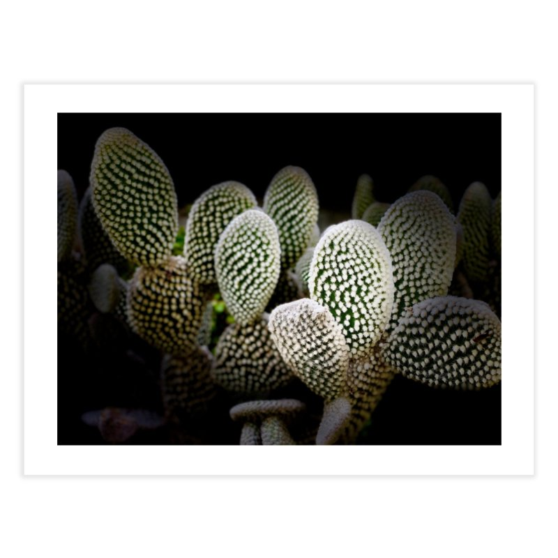 Cacti @ Night Home Fine Art Print by Disposable Bits's Shop