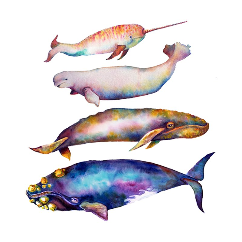 4 Watercolor Whales   by dotsofpaint threads