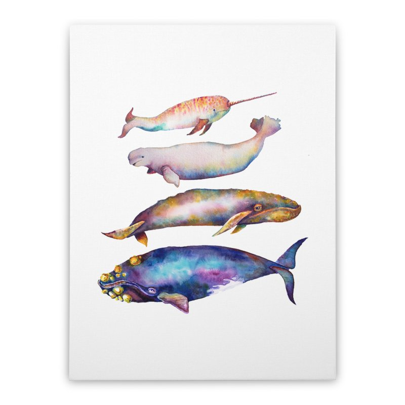 4 Watercolor Whales Home Stretched Canvas by dotsofpaint threads
