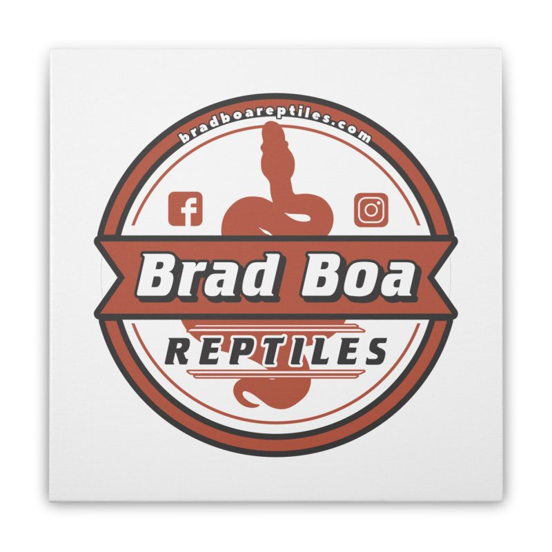 Brad Boa Reptiles Home Stretched Canvas by Drawn to Scales