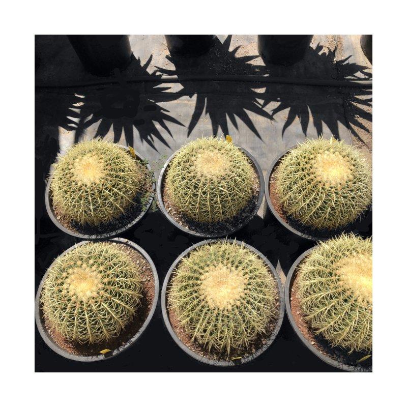 Cactus Men's Longsleeve T-Shirt by duocuspdesign Artist Shop