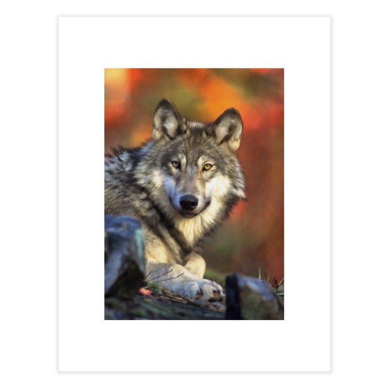 AUTUMN WOLF Home Fine Art Print by Eddie Christian's Artist Shop