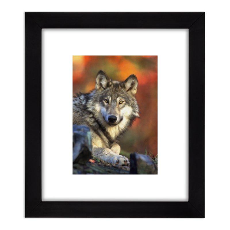 AUTUMN WOLF Home Framed Fine Art Print by Eddie Christian's Artist Shop