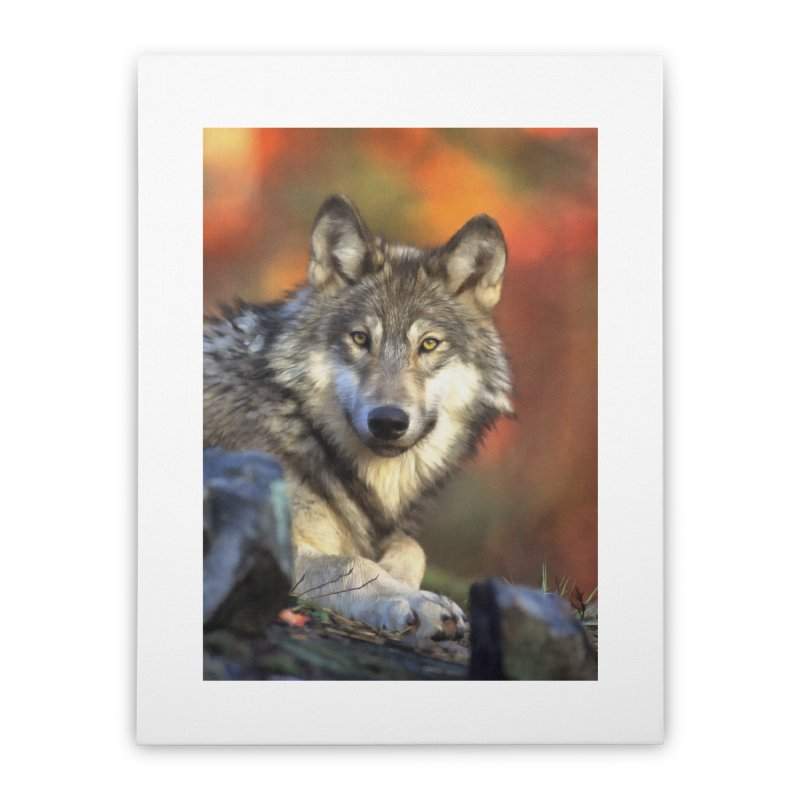 AUTUMN WOLF Home Stretched Canvas by Eddie Christian's Artist Shop
