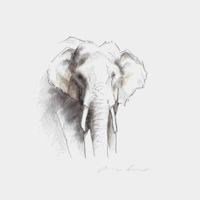Carina Kramer - Asian Elephant Sketch Men's Sweatshirt by Trunks & Leaves' Artist Shop