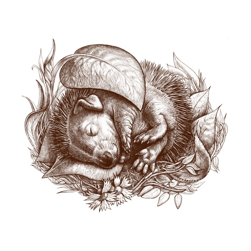 Baby hedgehog sleeping by elinakious's Artist Shop