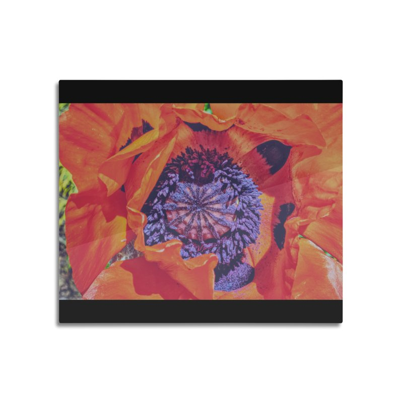 Poppy Burning Bright Home Mounted Aluminum Print by Ella Arrow, Curator of Wonder