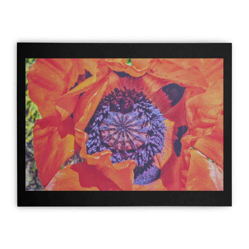Poppy Burning Bright Home Stretched Canvas by Ella Arrow, Curator of Wonder