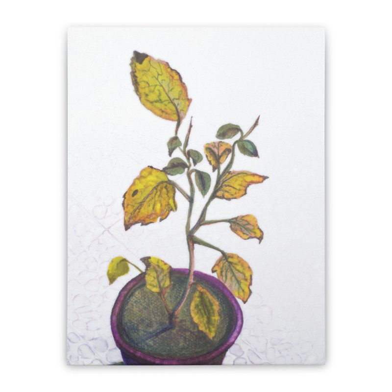 plant pot  Home Stretched Canvas by ellagershon's Artist Shop