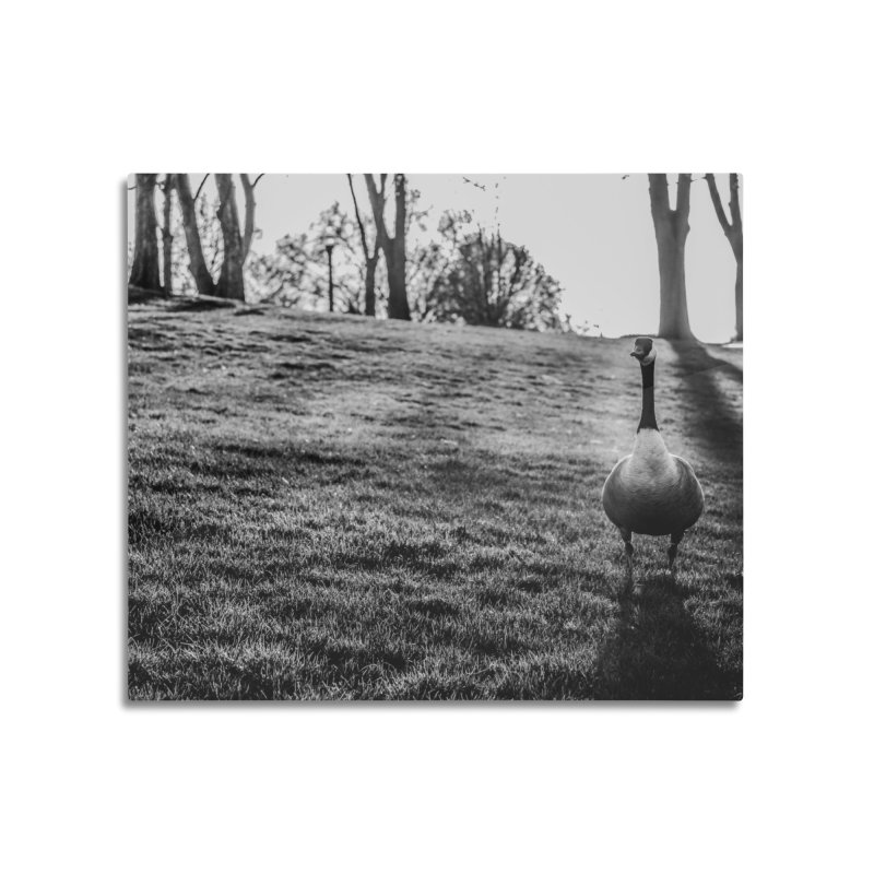 City of Geese Home Mounted Aluminum Print by emilyhanigan's Artist Shop