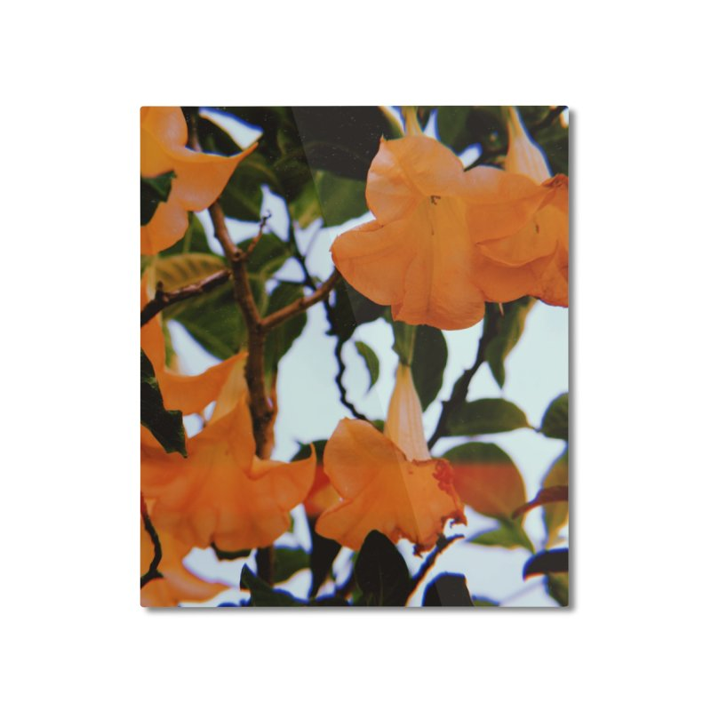 los feliz Home Mounted Aluminum Print by ENRAPTURED CLOTH