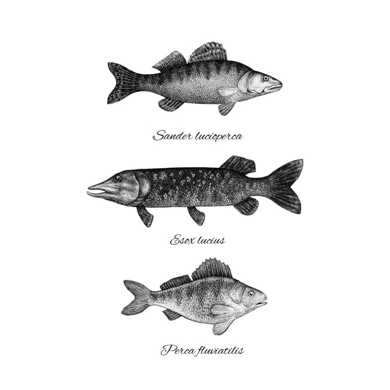 Zander, Pike And Perch by Eugenia Hauss's | Exiled Beauty
