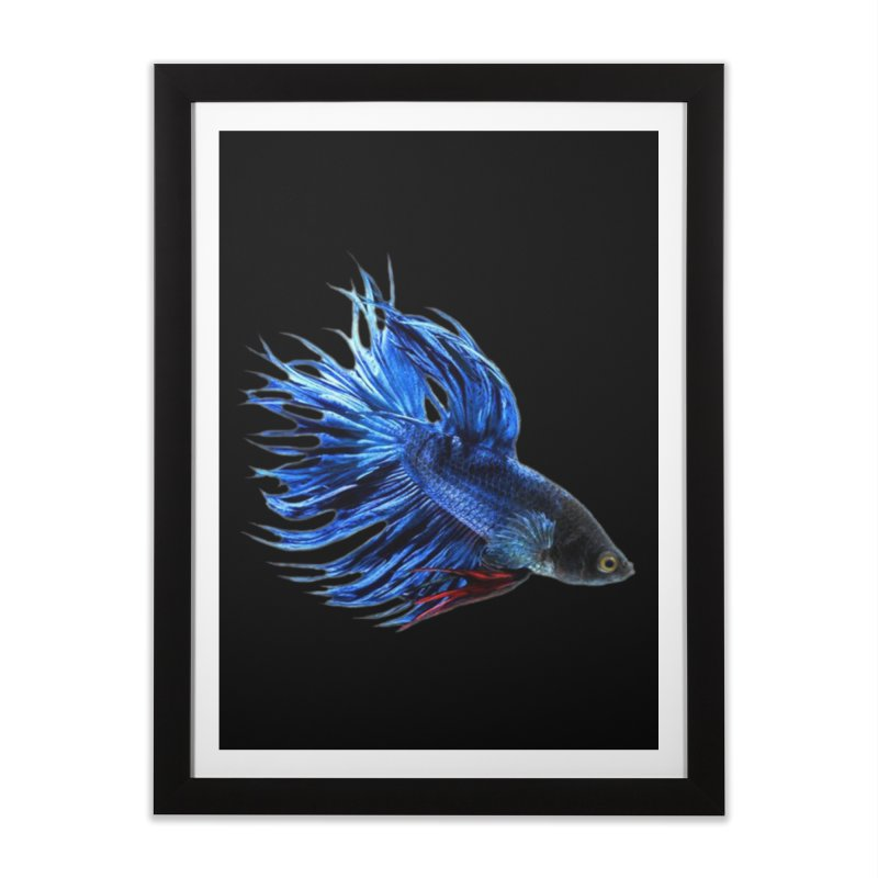 Royal Blue and Red Betta Fish Crowntail Male Swimming Beautiful Colors Home Framed Fine Art Print by Fringe Walkers Shirts n Prints