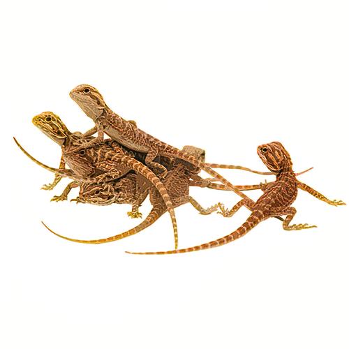 Reptiles-Amphibians-Invertebrates