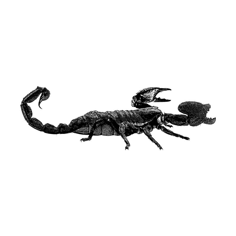 Now That's a Stinger – Emperor Scorpion Accessories Notebook by Gary Mc Alea Photography's Artist Shop