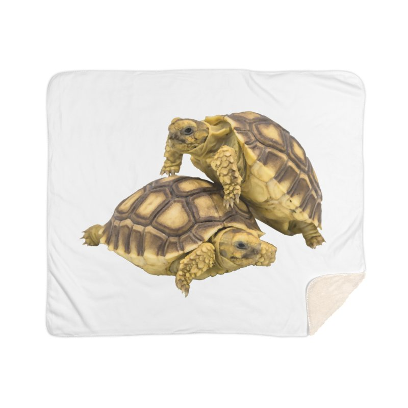 African Spurred Tortoises Home Blanket by Gary Mc Alea Photography's Artist Shop