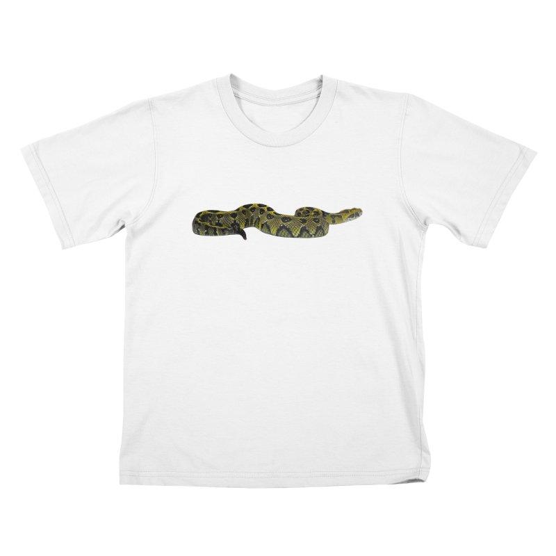 Bitis Parviocula Kids T-Shirt by Gary Mc Alea Photography's Artist Shop