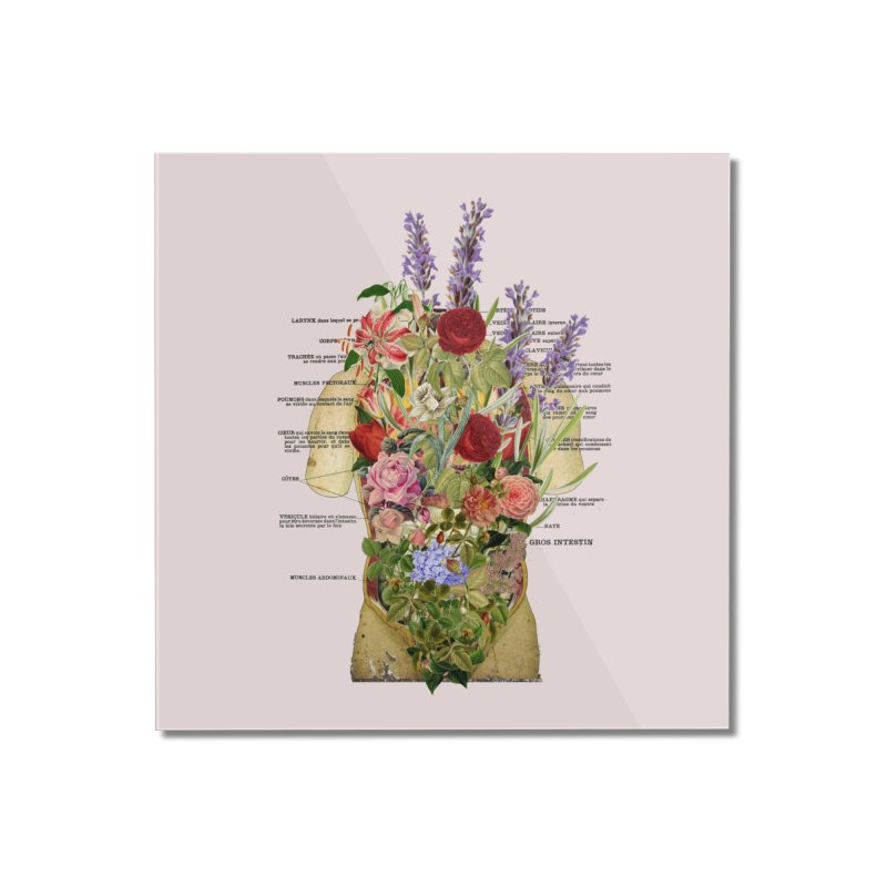 Growth -spring Home Mounted Acrylic Print by gasponce