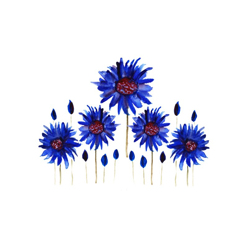 Blue anemones by Gillian Lancaster Art's Artist Shop