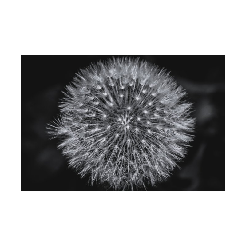 Dandelion Home Framed Fine Art Print by Gerónimo Martín Alonso Photography
