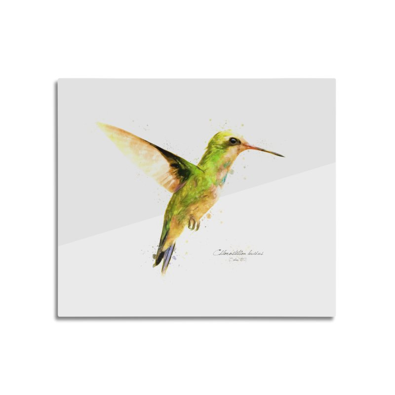 Hummingbird I Home Mounted Aluminum Print by Gerónimo Martín Alonso Photography